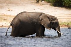 Beber do elefante imagem de stock