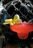 Bebida de la isla foto de archivo libre de regalías