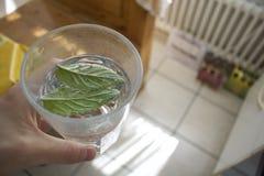 Bebida de restauración de consumición de la menta y del agua en un vidrio fotografía de archivo