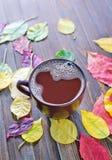 Bebida del cacao foto de archivo libre de regalías