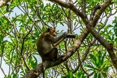 Bebida del mono un refresco en tiempo de verano Imagen de archivo libre de regalías
