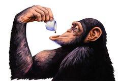 Bebida do macaco um a xícara de café Ilustração da aguarela Fotos de Stock Royalty Free
