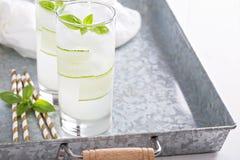 Bebida efervescente do pepino da manjericão em vidros altos Fotos de Stock