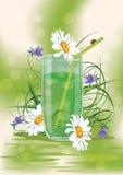 Bebida herbaria Imagen de archivo