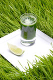 Bebida, trigo fresco Foto de archivo libre de regalías