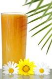 Bebida tropical Fotografia de Stock