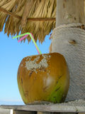 Bebida tropical Foto de Stock Royalty Free