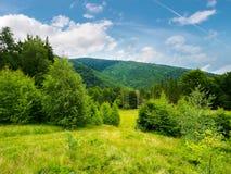 Bebost gebied in bergen royalty-vrije stock afbeelding