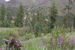 Bebost gebied op Pikes Peak Colorado royalty-vrije stock fotografie