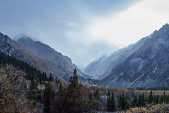 Beboste berghelling stock afbeelding