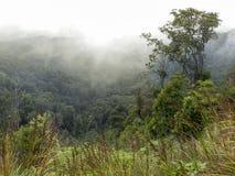 Beboste berghelling in een lage het liggen wolk royalty-vrije stock afbeelding