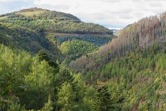Beboste boom gevoerde vallei het Verenigd Koninkrijk, Europa De herfst of Daling Royalty-vrije Stock Foto