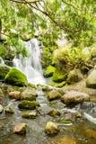Beboste Waterval op Rocky Creek Royalty-vrije Stock Foto