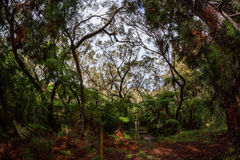 Bebour forest -  Cirque of Salami, in Reunion island Stock Photography