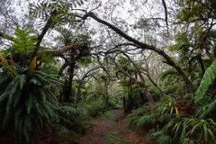 Bebour forest -  Cirque of Salami, in Reunion island Stock Photos