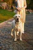 Bebouwd schot van jonge Afrikaanse dame die met hond in park lopen Royalty-vrije Stock Afbeeldingen