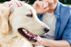 bebouwd schot van mensen die golden retrieverhond met tong uit in park strijken Royalty-vrije Stock Foto