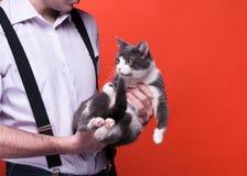 Bebouwde mening die van de mens leuk grijs met witte kat houden stock foto