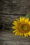 Bebouwde mening van enige zonnebloembloei Stock Fotografie