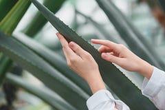 bebouwde mening van tedere vrouwelijke handen stock afbeelding