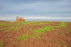 bebouwing de voorbereiding van land voor het kweken van gewassen Groene strook stock afbeeldingen