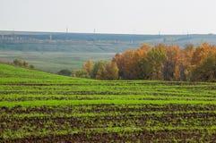 bebouwing de voorbereiding van land voor het kweken van gewassen Groene strook royalty-vrije stock fotografie