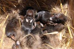 Bebés del conejo Imagenes de archivo