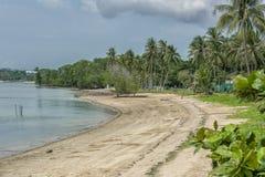 Becah con el parque tropical fotografía de archivo libre de regalías