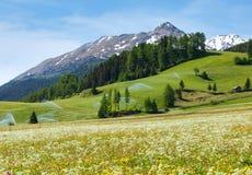 Becchi di acqua di irrigazione in montagna delle alpi di estate Fotografie Stock Libere da Diritti