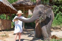Becerro de alimentación del elefante de la muchacha adolescente Imágenes de archivo libres de regalías