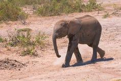 Becerro del elefante, parque nacional del amboseli, Kenia fotografía de archivo