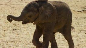 Becerro lindo del elefante del bebé en esta imagen del retrato de Suráfrica foto de archivo