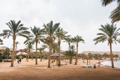 Bech with palms and umbrellas in a Windy and cloudy day. Bech with coconut trees and umbrellas in a Windy and cloudy day Stock Photography
