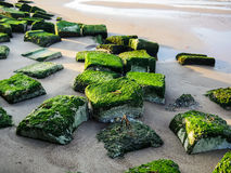 Bech and stone near the ocean. Bech and stone near the Baltic sea Stock Image