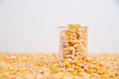Becher de noyaux de maïs se reposant dans la couche de maïs images libres de droits