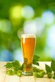Becher mit Bier und Hopfen Stockbild