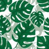 Beckground senza cuciture di Monstera Modello verde piastrellato della giungla Vettore Illustrazione di Stock