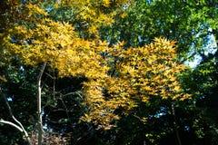 Becoming autumn Stock Photo