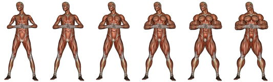 Becoming a muscular man - 3D render. Set of six men showing progression to become a muscular man isolated in white background Stock Photography