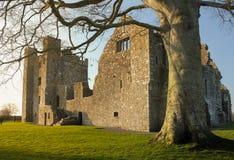 bective abbey klippning ståndsmässiga Meath ireland Royaltyfria Foton