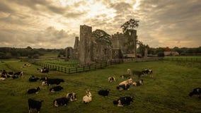 bective abbey klippning ståndsmässiga Meath ireland Arkivfoto