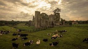 Bective Abbey. Trim. county Meath. Ireland. The cistercian abbey of Bective. Trim. county Meath. Ireland. Used as location for Braveheart film stock photo