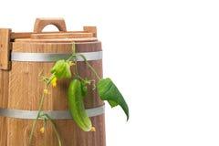 Beczki dla warzyw ważą ogórek z liśćmi, odosobnionymi na bielu Obrazy Stock