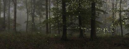Bedöva bild för fantasistillandskap av eldflugor i natten tim arkivbilder