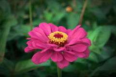 Bedöva blommor Arkivbild