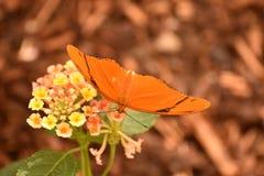 Bedöva den Julia malen som vilar på en härlig blomma Royaltyfri Fotografi