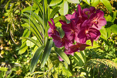 Bedöva den karmosinröda blomman Royaltyfri Bild
