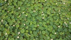 Bedöva det flyg- surret lagerföra fotografi av blomningen av lotusblommor på sjön nära vägen royaltyfri bild