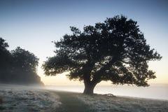 Bedöva dimmigt Autumn Fall soluppgånglandskap över täckt frost Royaltyfri Bild