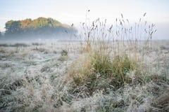Bedöva dimmigt Autumn Fall soluppgånglandskap över täckt frost Royaltyfri Foto
